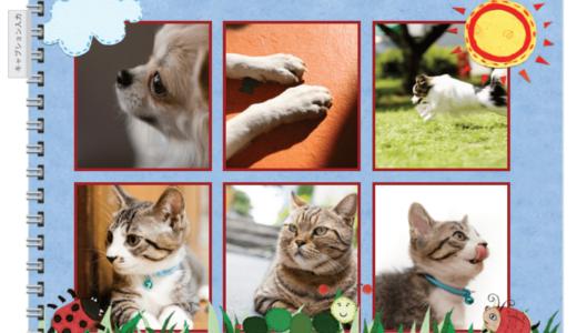 ペット写真におすすめのフォトブック4選!