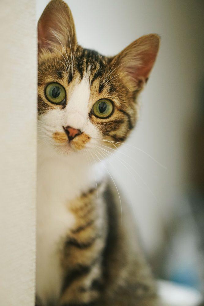 猫のフォトブック 自費出版
