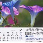 アオヤギ写真館:フジカラープロペーパー微粒面(ラスター)